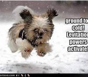 Cute Dog Quotes. QuotesGram