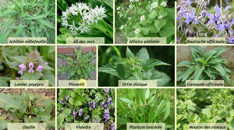 cuisine des plantes sauvages cuisine de plantes sauvages les saisons de la vallée