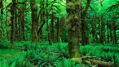 Green Forest Image Desktop by Nature Wallpapers Hd Wallpapers Desktop Wallapers