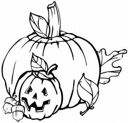 Pumpkins Clip Pumpkin Halloween Drawing Onlinelabels Sheet