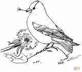 Goldfinch Coloring American Dandelion Pages Seeds Feeds Printable Eastern Template Bird Colouring Supercoloring Goldfinches Drawings Cartoon Birds Crafts Sketch Realistic sketch template
