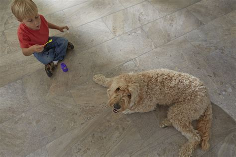 best flooring with pets top 28 best flooring with pets laminate wood flooring pet stains wooden home best hardwood