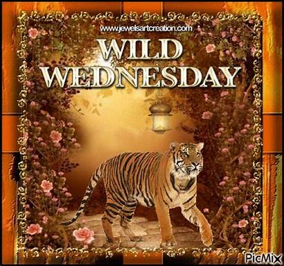 Wild Wednesday Morning Meme Quotes Animal Lovethispic