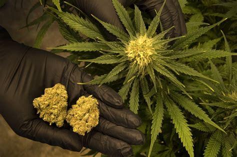 Medical Marijuana Victories In Florida, North Dakota