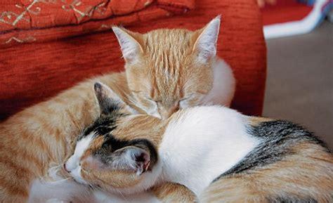 nuertinger zeitung tonnen schleppen katzen retten