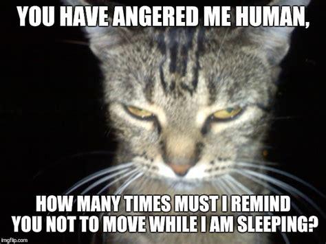 Tabby Meme - tabby meme 28 images meme tabby humane society of dallas county grey and white tabby cat