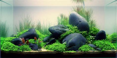 aquascaping with rocks projet 240 ou 180 en aquascape hardscape