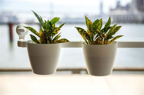 Window Seal Pots by Ikea Hack Suction Cup Window Planters Houseplants