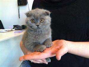 17 Cutest Kittens Ever Photographed In The World ...