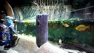 Gucci Val D Europe : visite de l 39 aquarium sea life paris val d 39 europe youtube ~ Medecine-chirurgie-esthetiques.com Avis de Voitures