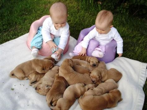 cute pictures  puppies  babies  super cute