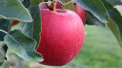 washington apple pear growers approve  million special