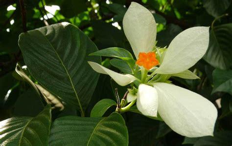 flower kedar photography