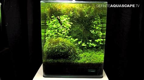 aquascaping  art   planted aquarium  nano pt