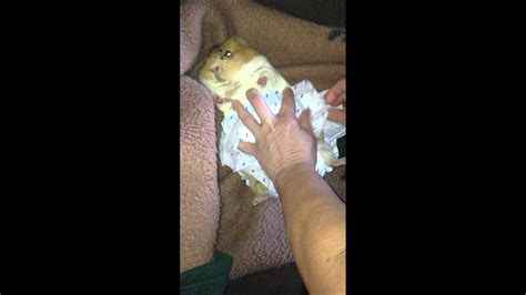 peanut butter   diaper change youtube