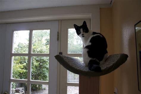 build  cat tower  scratch home design