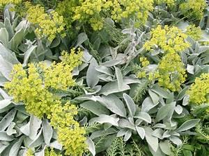 Pflanzen Für Trockene Schattige Standorte : silbert ne im garten gartenzauber ~ Michelbontemps.com Haus und Dekorationen