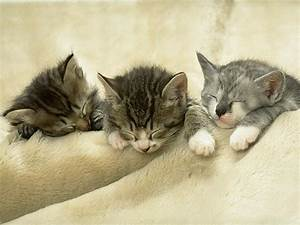 Very Tired.... - XciteFun.net
