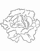 Lettuce Coloring Lechuga Colorear Colorare Printable Verduras Vegetales Insalata Disegni Dibujo Imagenes Dibujos Disegno Hojas Pintar Dibujar Hoja Bambini Vegetables sketch template