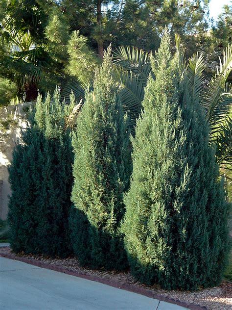 popular landscape plants temperate climate permaculture permaculture plants juniper