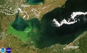 Researchers predict significant harmful algal bloom in ...