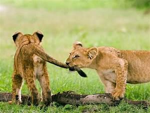 Beautiful Animals Safaris: September 2012