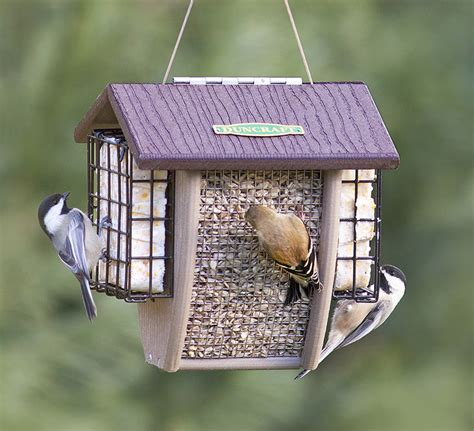 suet bird feeders bird cages