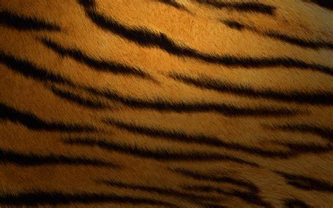wincustomize explore logonstudio tiger stripes