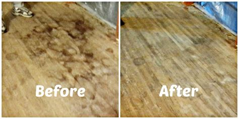 How To Remove Pet Urine Stains From Hardwood Floors Youtube