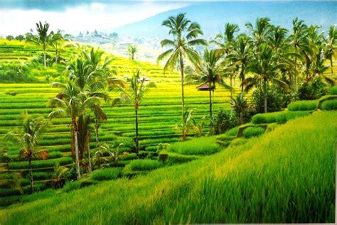 wallpaper pemandangan keren gambar alam  wallpaper