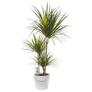 plante interieur facile entretien plante d interieur facile a entretenir maison design bahbe