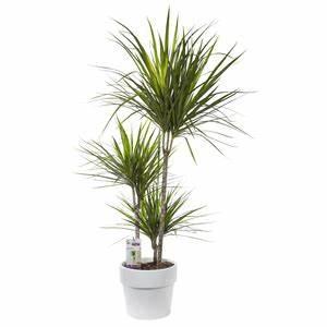 Plante D Intérieur Haute : plantes d 39 int rieur facile entretenir plantes et ~ Premium-room.com Idées de Décoration