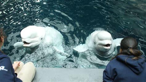 imaq whisper aquarium animals georgia exhibits animal