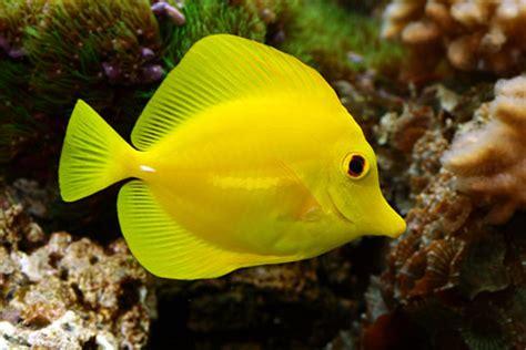 poissons d aquarium le de eduma