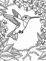 Coloring Hummingbird Pages Printable Sheets Bird Drawing Onlycoloringpages Favorite sketch template