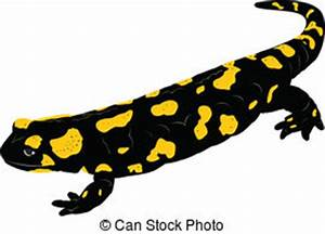 Salamander Vector Clipart EPS Images. 723 Salamander clip ...
