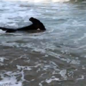 Hammerhead is spotted on the beach in Maryland | Daily ...