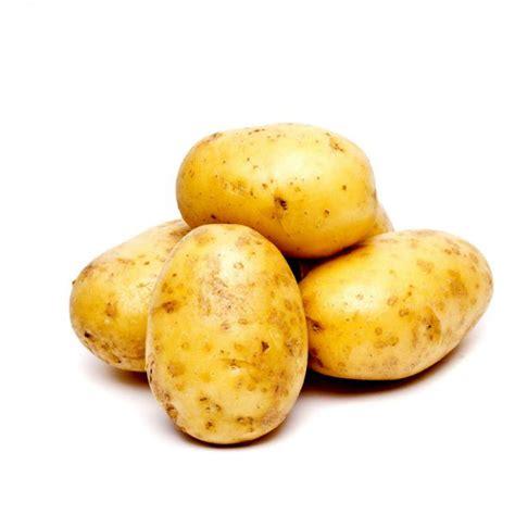 pomme de terre en chambre plants de pomme de terre bio apollo