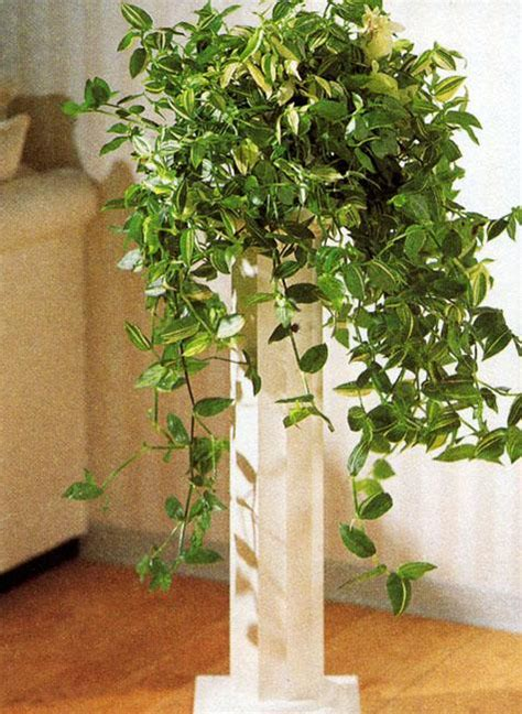 cheap indoor plants cheap ideas for eco interior decorating with