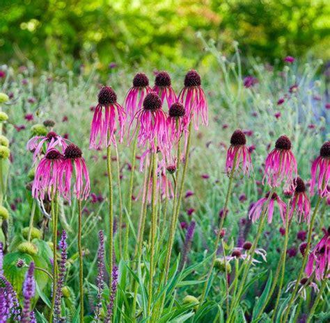 plante d ombre exterieur vivace plantes vivaces pour le jardin vivaces couvre sol vivaces d ombre et de soleil