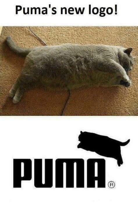 Puma Pants Meme - 25 best memes about pumas pumas memes