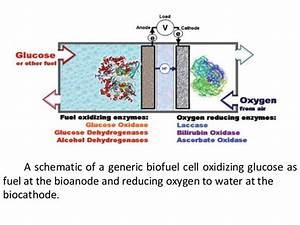Diagram Enzymatic Biofuel Cell