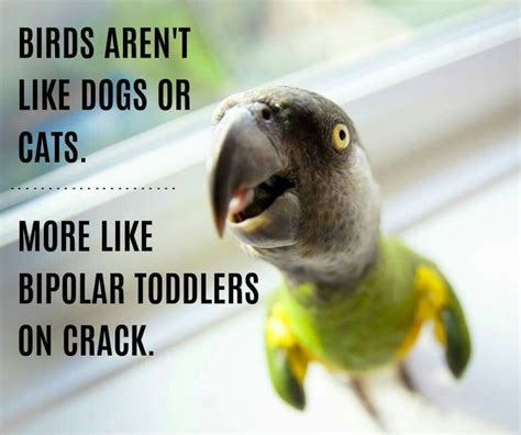 Crazy Bird Meme - 189 best images about bird humor funny birds on pinterest ducks funny bird pictures and parrots