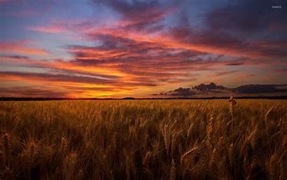Field Barley Sky Orange Under Corn Nature