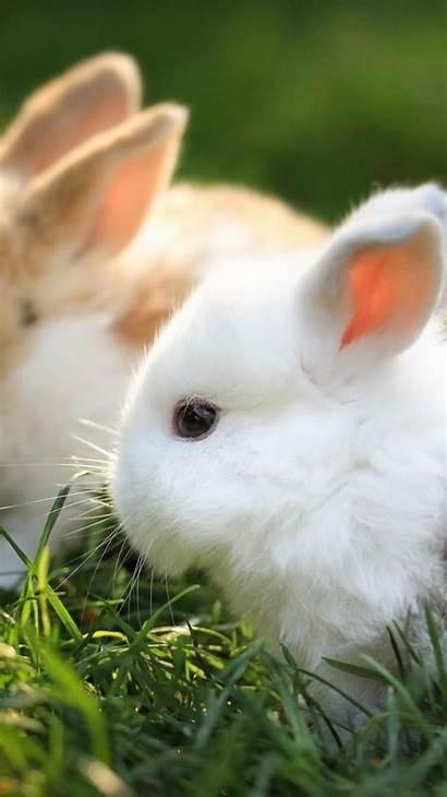 Bunnies Wallpapers Iphone Bunny 6s Backgrounds 2448