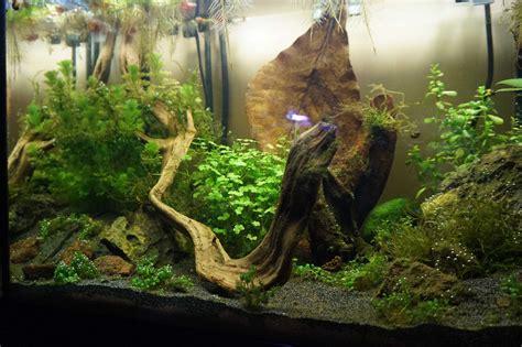 aquarium crevettes d eau douce mortalit 233 de crevettes blues velvet