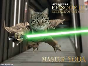wars cat wars return of the jedi cat pictures freaking news