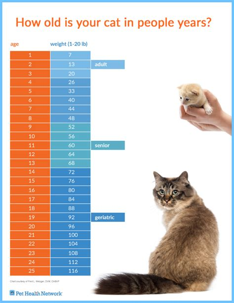 cat years chart how old is your cat in people years