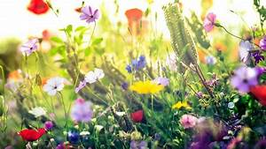 Blumen Im Frühling : fr hling fotografieren lichtemotionist ~ Orissabook.com Haus und Dekorationen