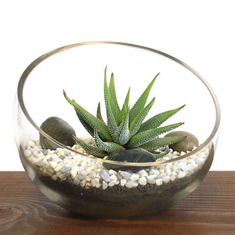terrarium kit zen bowl aloe succulent plants diy succulents easternleaf planting bowls vs hanging sold